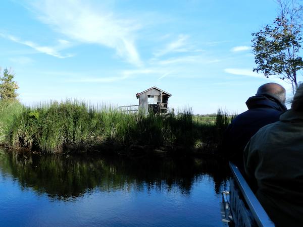 Munson's Swamp